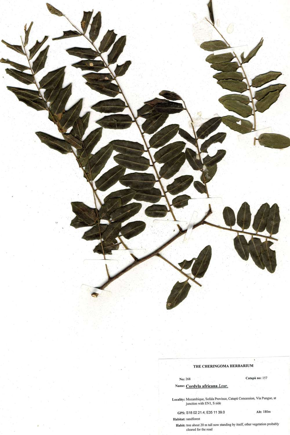 Herbarium Sample