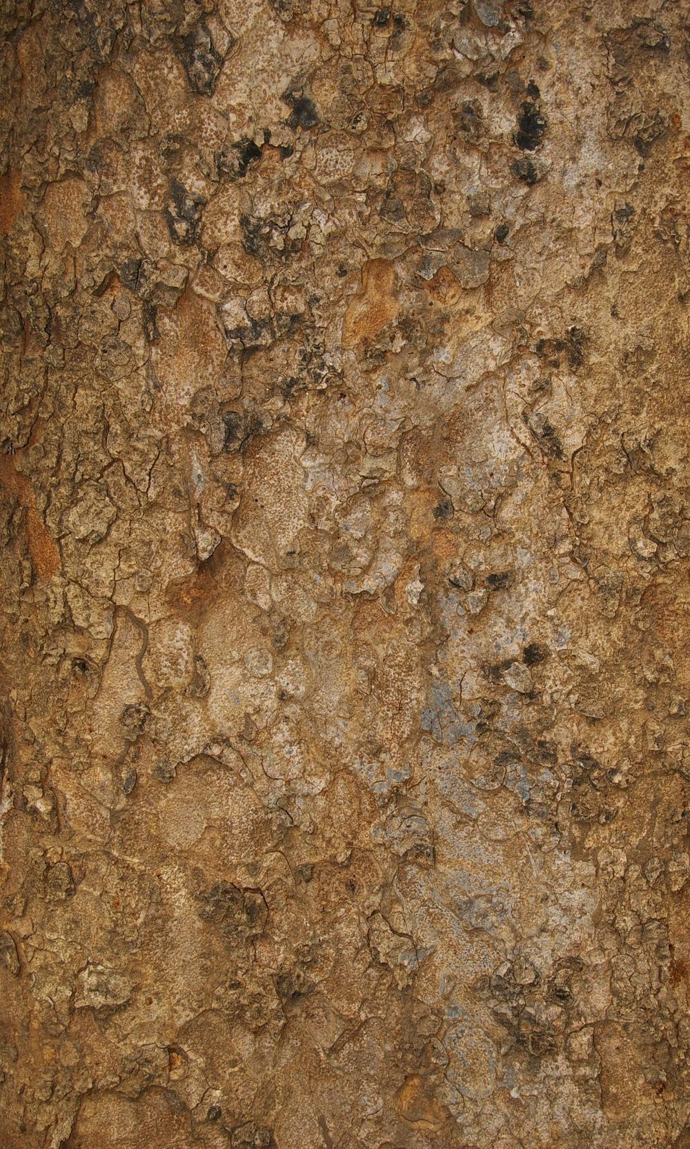 Chamfuta bark