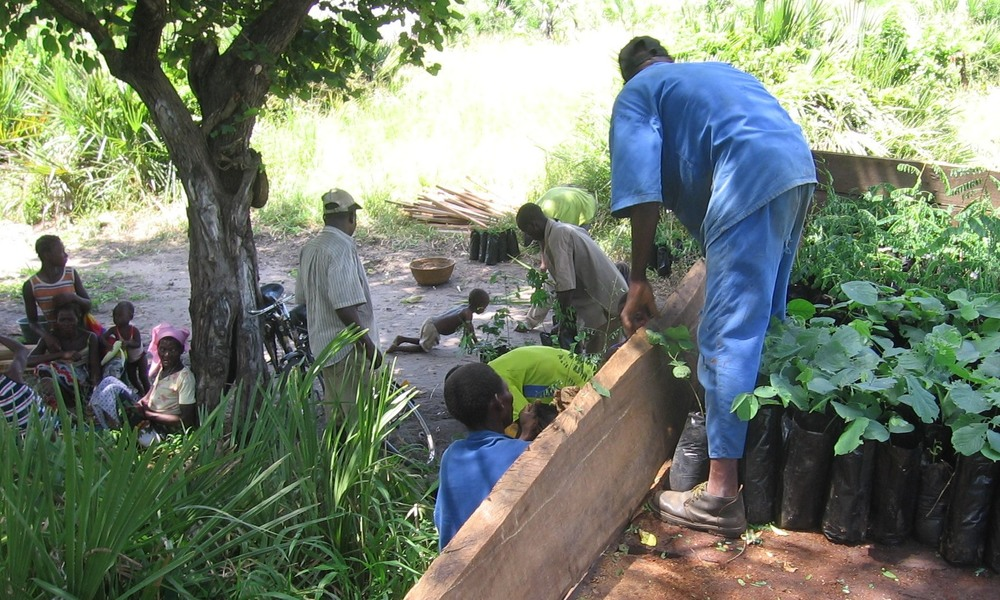 Entrega de árvores à comunidade  -  Delivering trees to the community