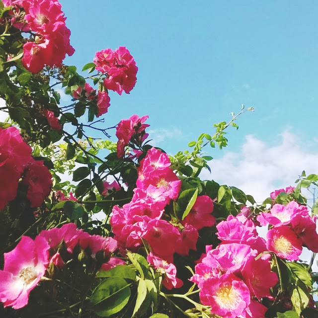 Poppytalk Summer Colour Instagram Challenge.