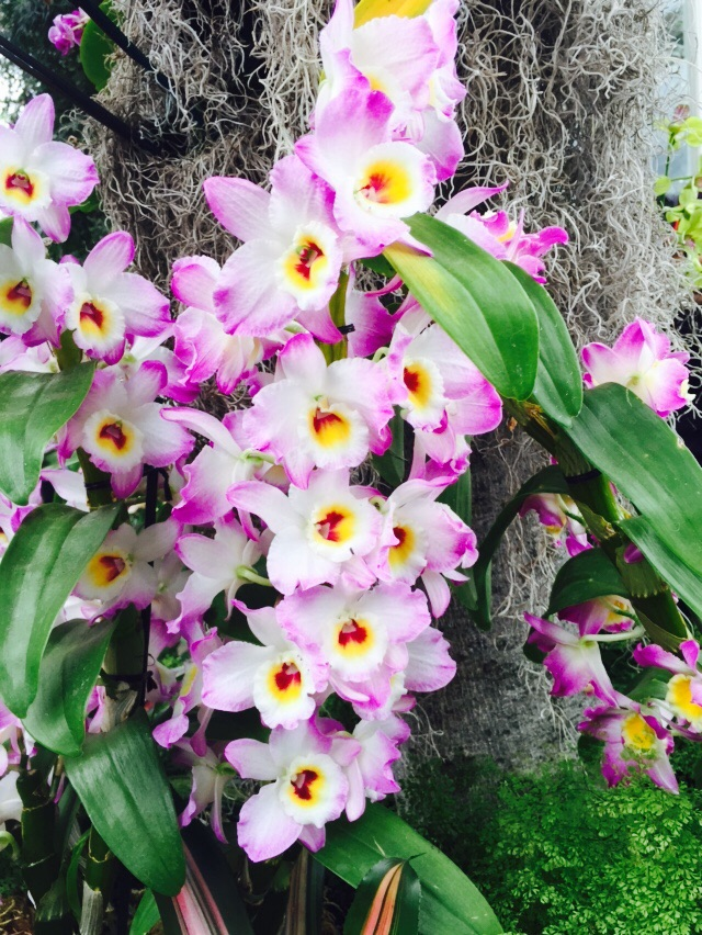 Orchid colors are magical