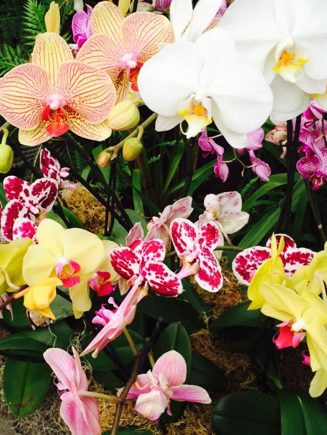 These are some of the many types and colors of orchids found at the Orchid Show at the New York Botanical Gardens
