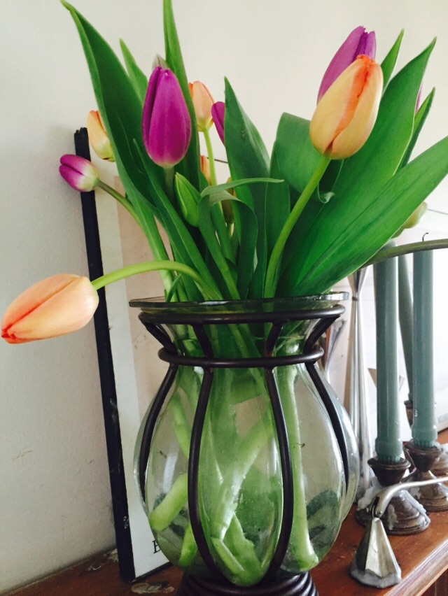 Are the tulips more of a peach color, or might you call them Ballet Slipper? Image Jessica Gordon Ryan via iPhone6. (Pottery Barn Hurricane vase)