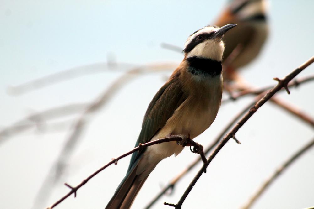 Birds at The Bronx Zoo. Image Jessica Gordon Ryan