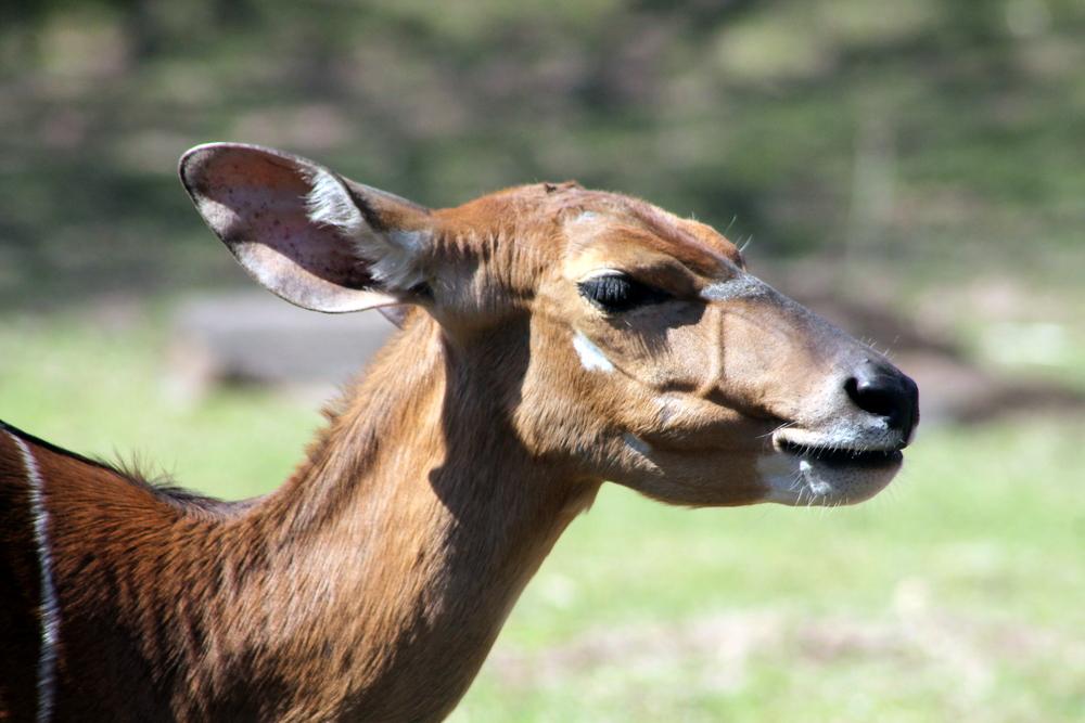 Oh deer! Image Jessica Gordon Ryan