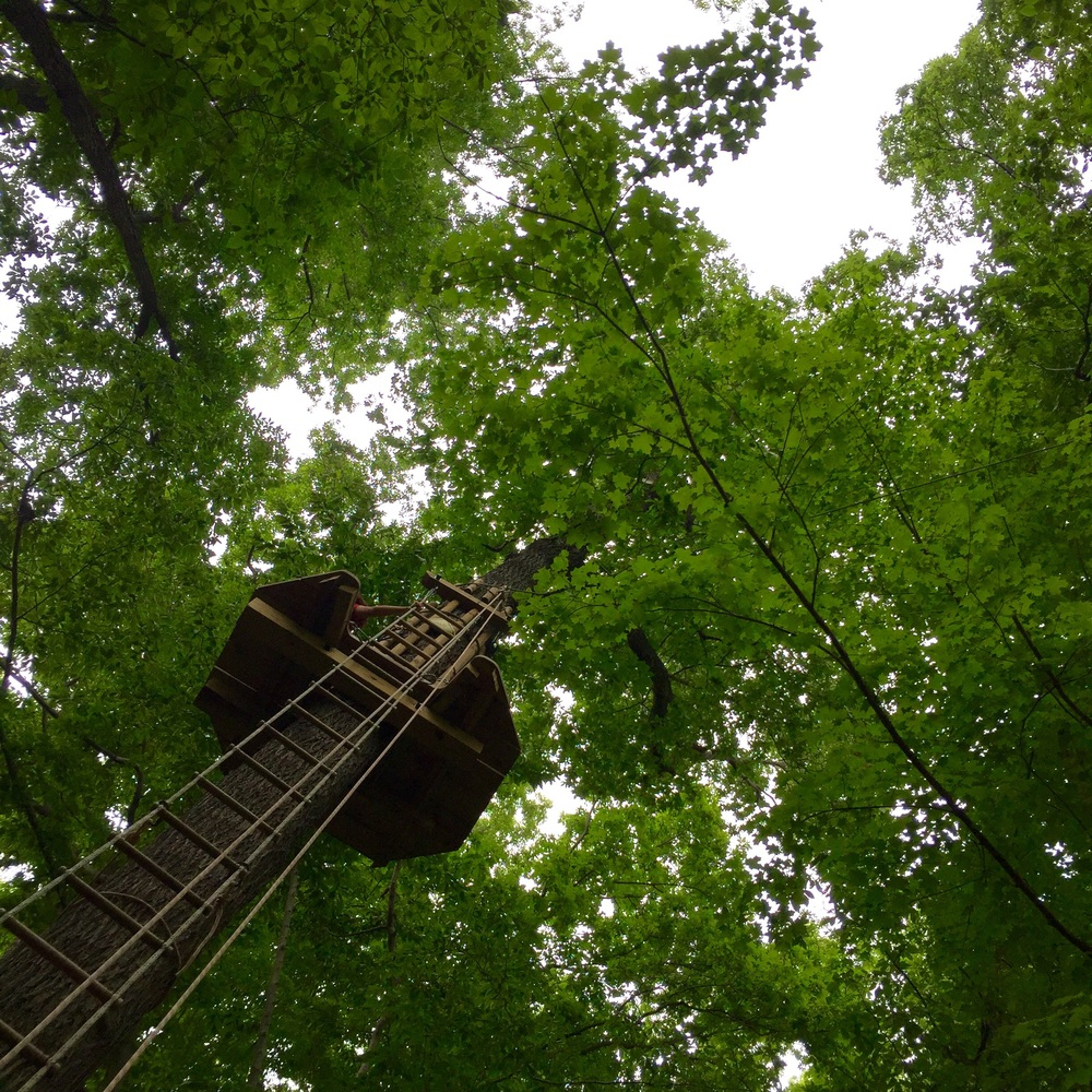 Go Ape Review. The Entertaining House. All images shot with iPhone 6