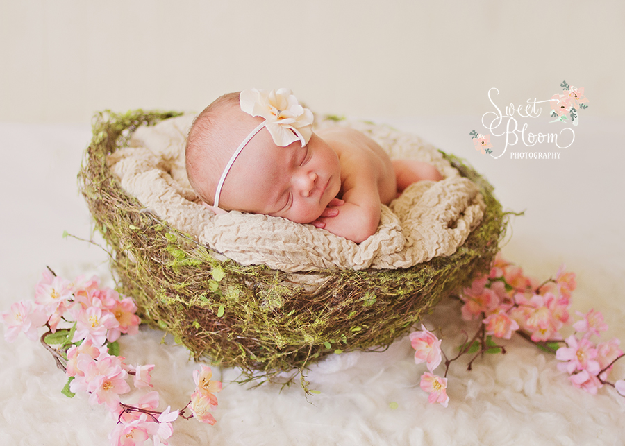 cincinnati ohio newborn photographer violet 3.jpg