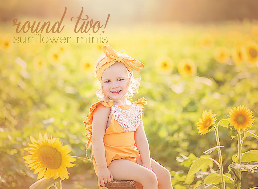 Dayton Ohio Sunflower Mini Sessions Yankee Street Market | Sweet Bloom Photography | www.sweetbloomphotography.com