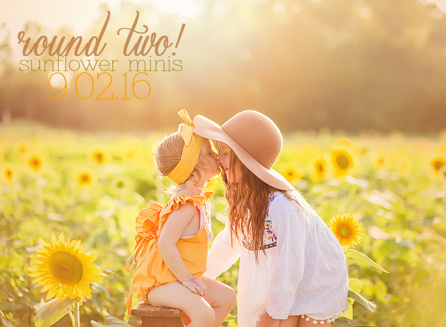 Sunflower MIni Sessions in Dayton Ohio | Sweet Bloom Photography | www.sweetbloomphotography.com