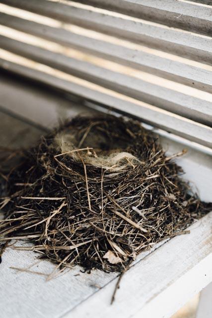 birds nest.jpg