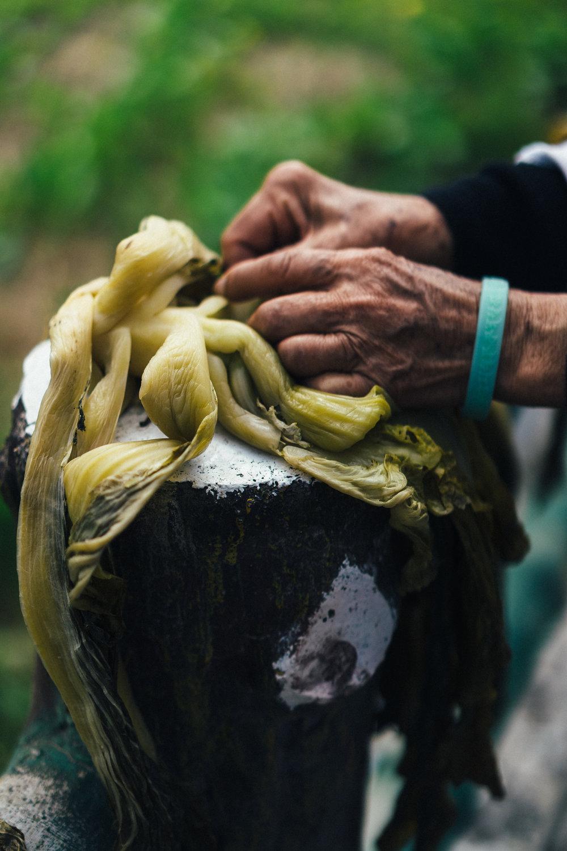 Mustards hands closeup (vert).jpg