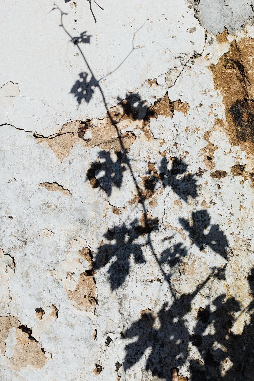 vine shadow.jpg