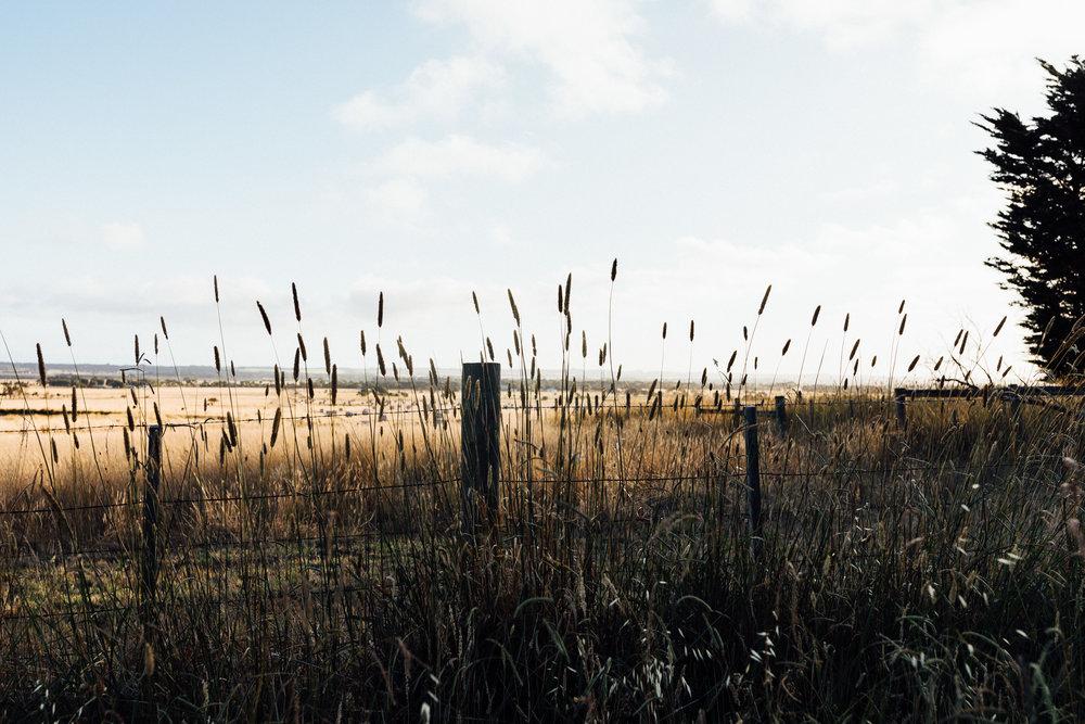 Torquay Farmland.jpg