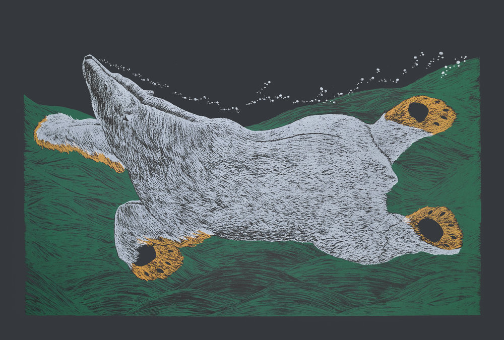 Tim Pitsiulak SWIMMING BEAR, 2016 Screenprint on Arches Cover Black Printer: Open Studio 76.5 x113 cm edition of 50