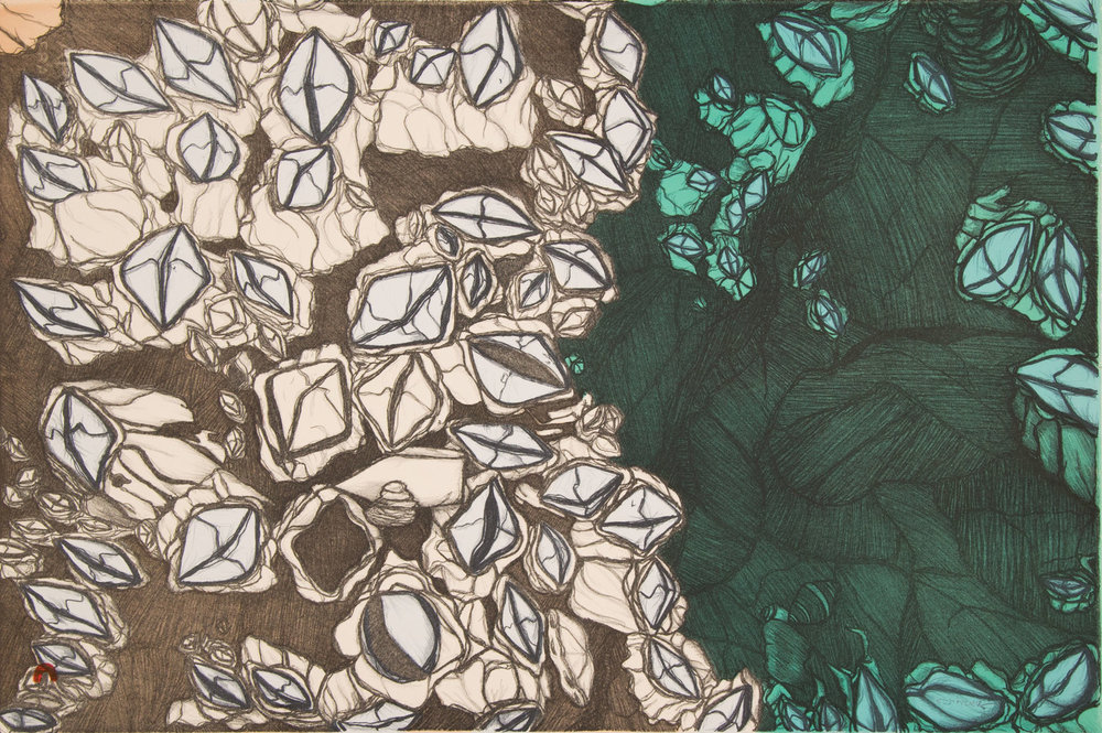 PADLOO SAMAYUALIE   Barnacles   Lithograph  38 x 56.5 cm  $600  Dorset ID#18-28