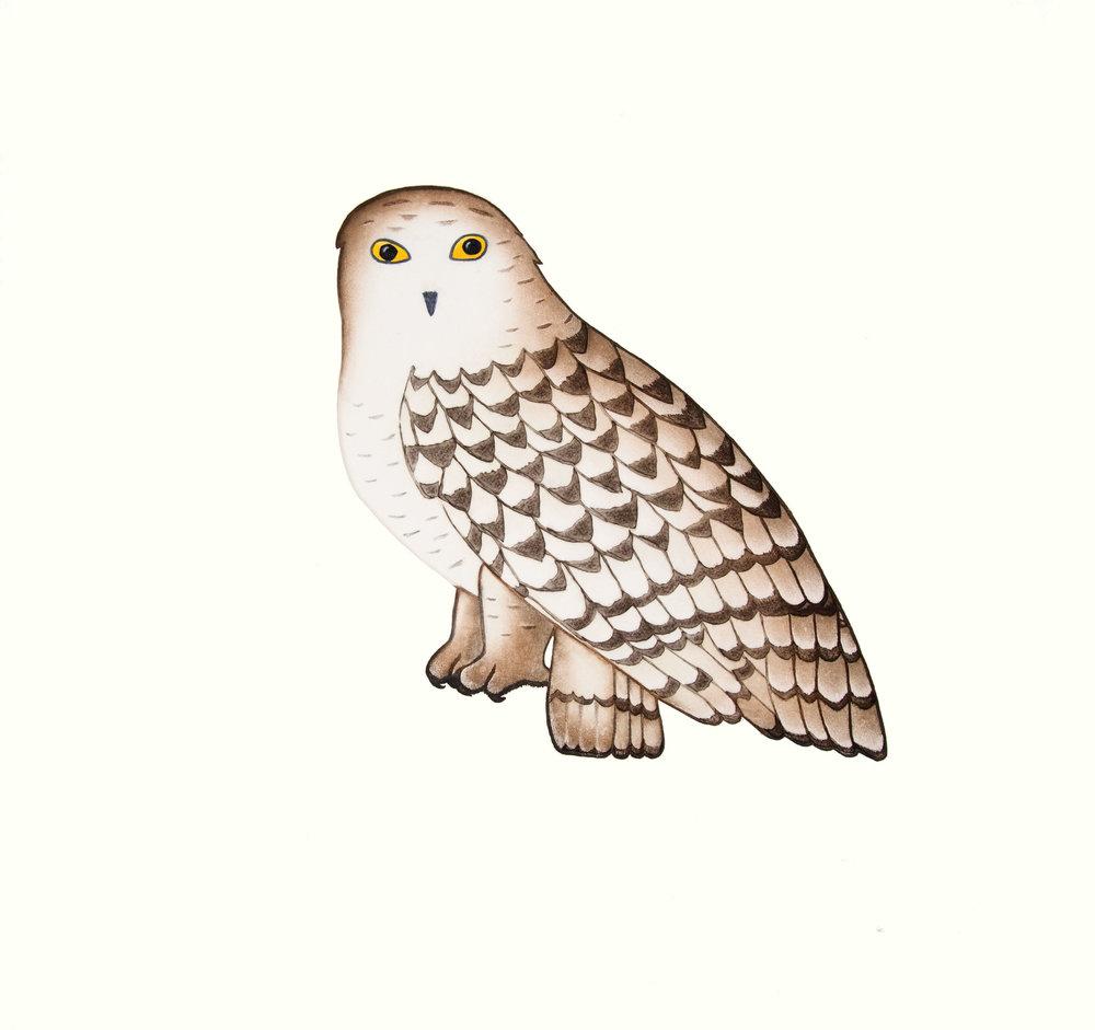 PAUOJOUNGIE SAGGIAK   Noble Owl   Etching, Aquatint & Hand Painting  67 x 69.5 cm  $700  Dorset ID# 18-11