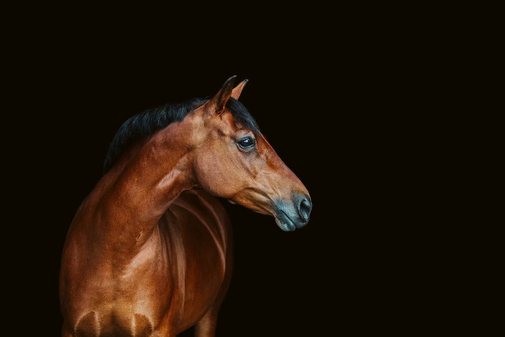 2018yearinreview-equine-11.JPG
