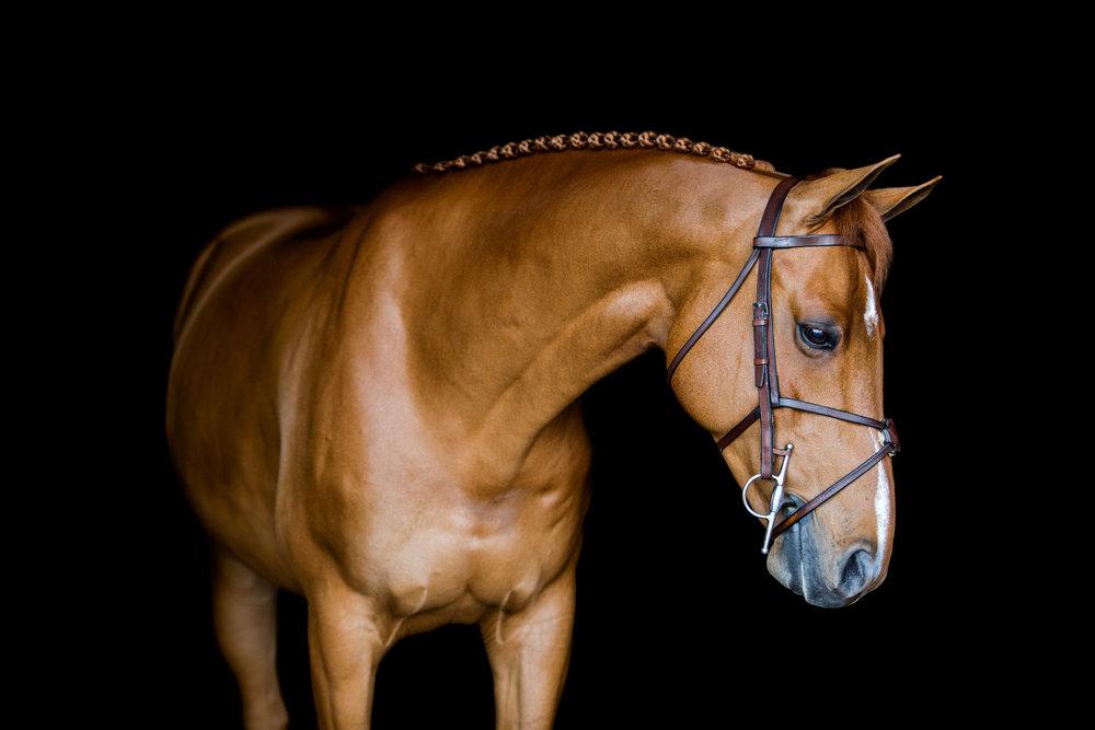 equine-10.JPG