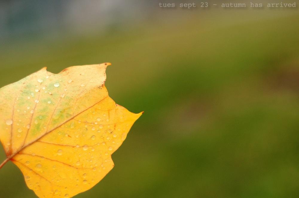 DSC_2244-Edit-1.jpg