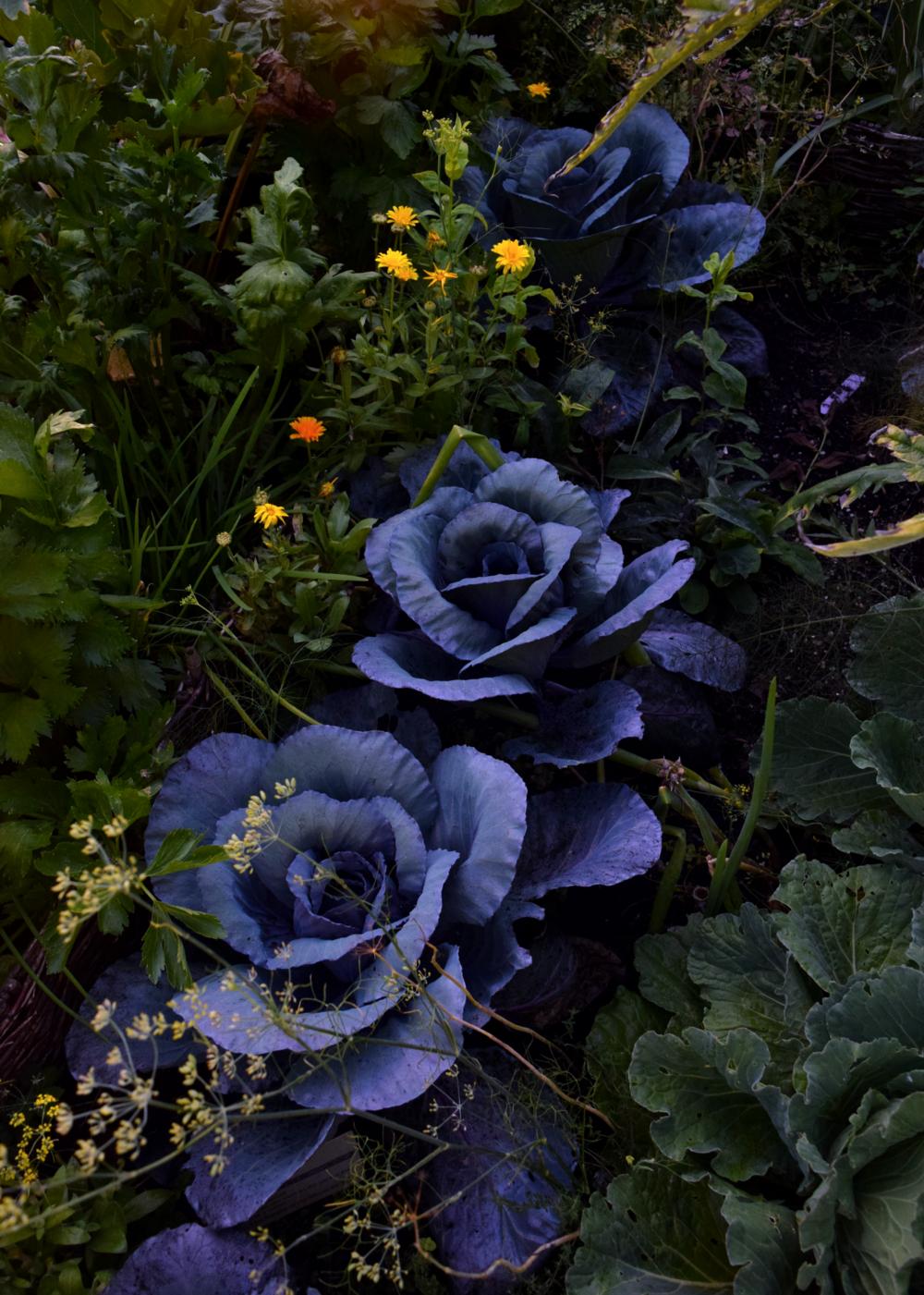 Garden Drama
