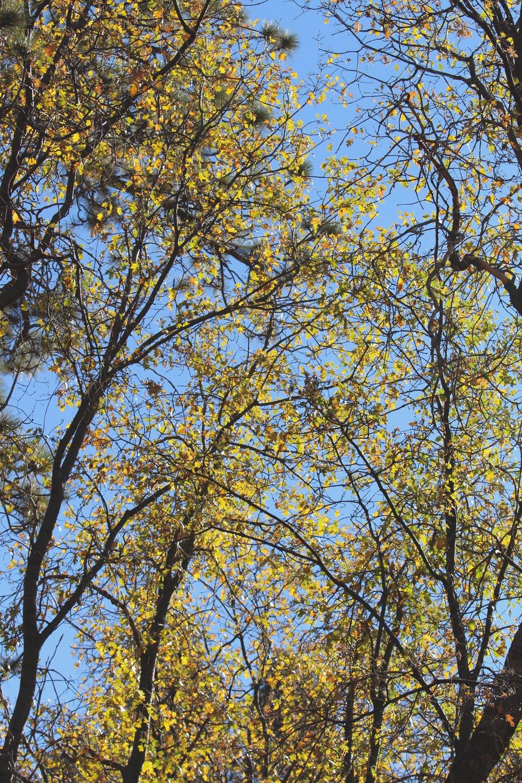 Overhead - Holli Z Photography - 1.jpg