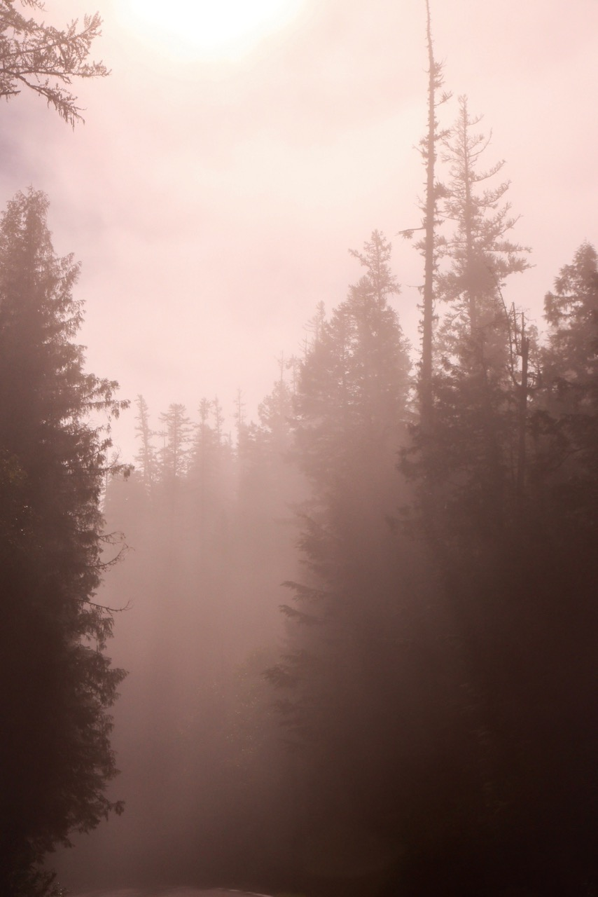 Trees & Forests Nature - Holli Z Photography - 4.jpg