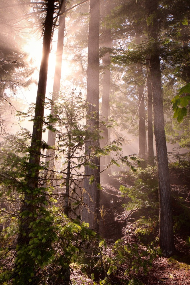 Trees & Forests Nature - Holli Z Photography - 6.jpg