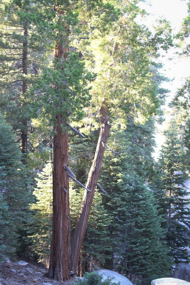 Trees & Forests Nature - Holli Z Photography - 11.jpg