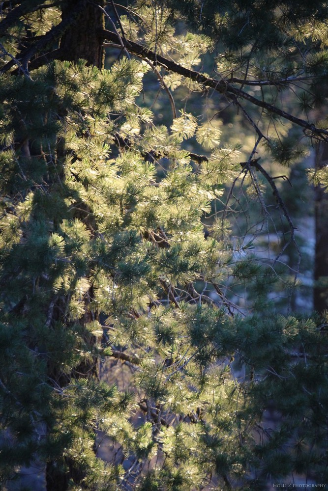 Trees & Forests Nature - Holli Z Photography - 12.jpg