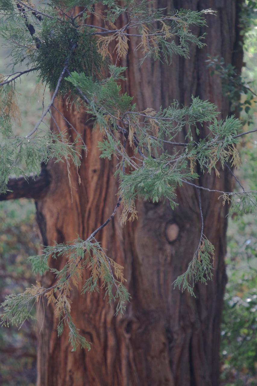 Trees & Forests Nature - Holli Z Photography - 18.jpg