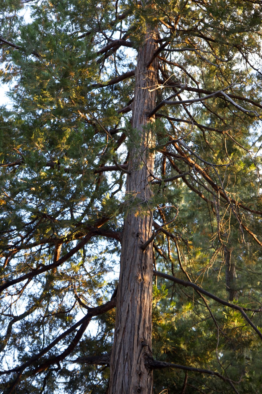 Trees & Forests Nature - Holli Z Photography - 21.jpg