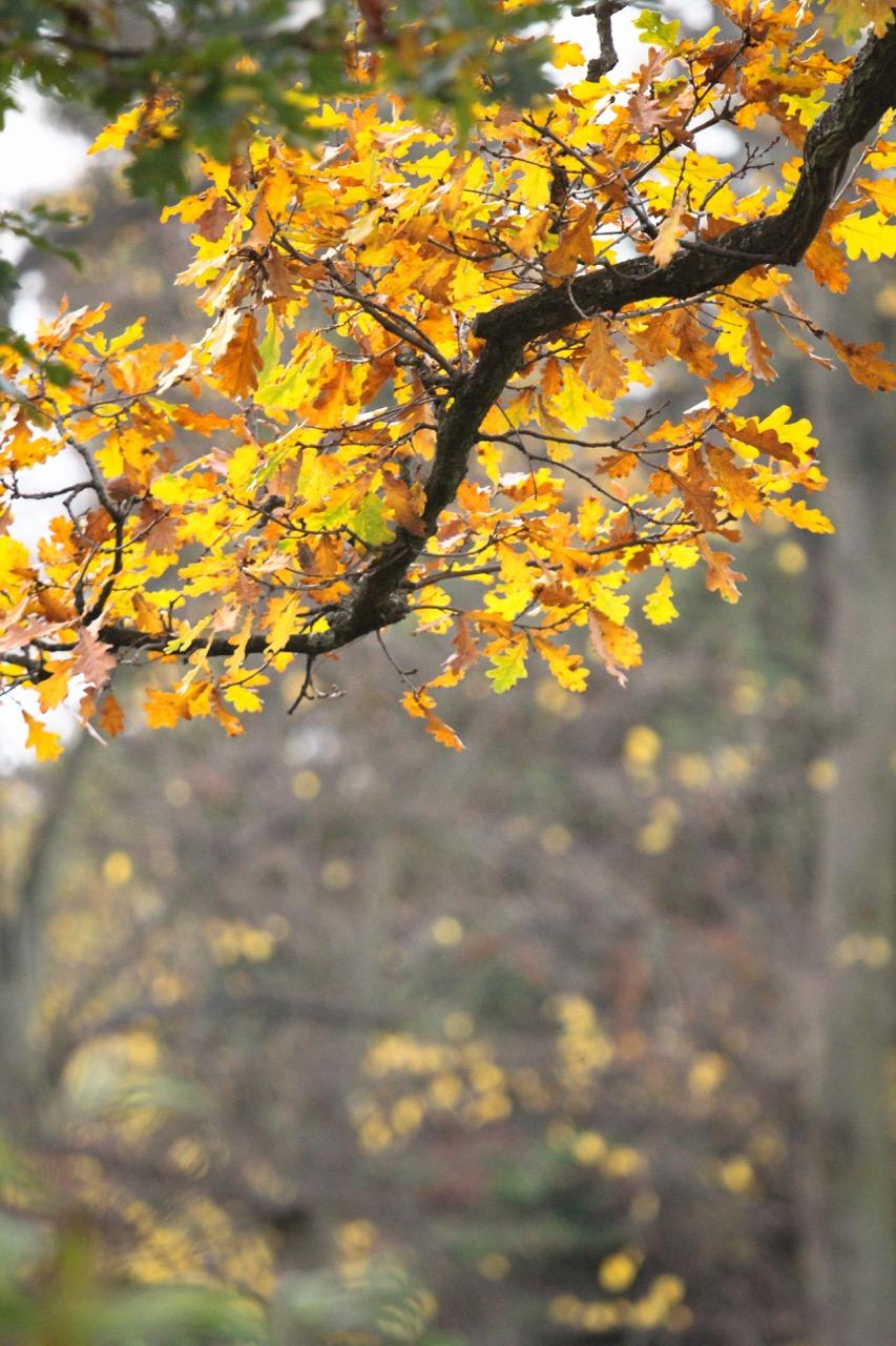 Autumn Nature - Holli Z Photography - 3.jpg