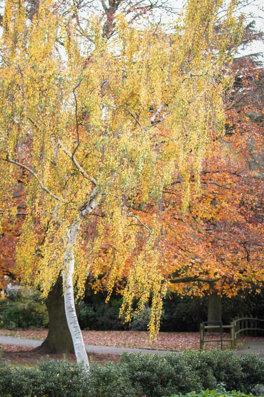 Autumn Nature - Holli Z Photography - 4.jpg