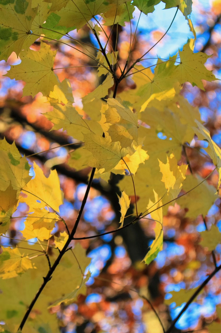 Autumn Nature - Holli Z Photography - 5.jpg