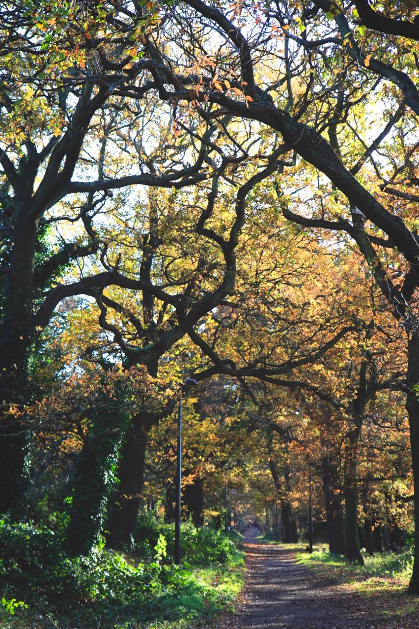 Autumn Nature - Holli Z Photography - 7.jpg