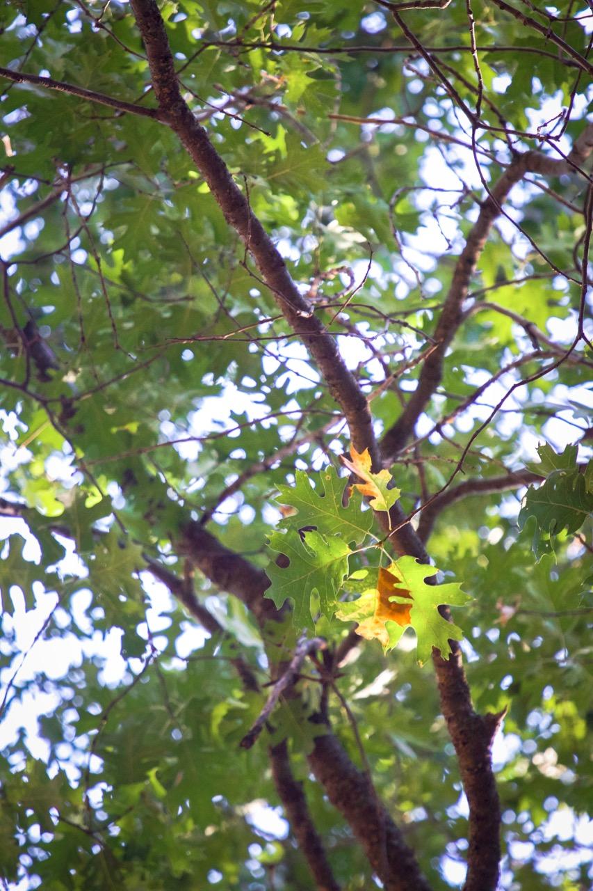 Autumn Nature - Holli Z Photography - 8.jpg