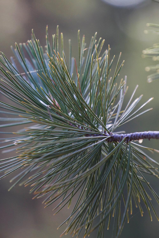 Needle - Holli Z Photography - 1.jpg