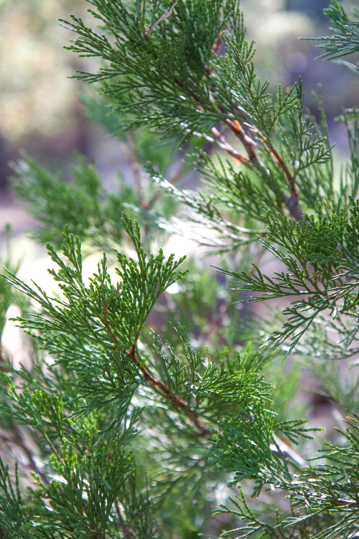 Six Trees One - Holli Z Photography - 1.jpg