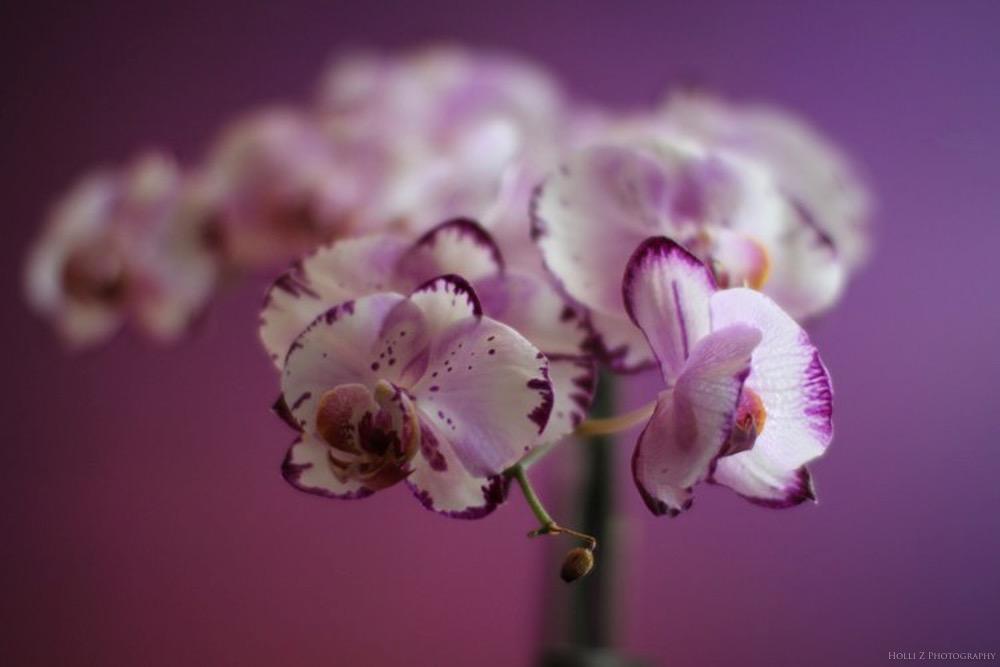 Details Nature - Holli Z Photography - 5.jpg