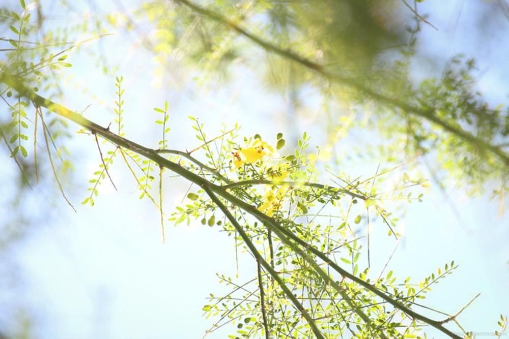 Details Nature - Holli Z Photography - 13.jpg