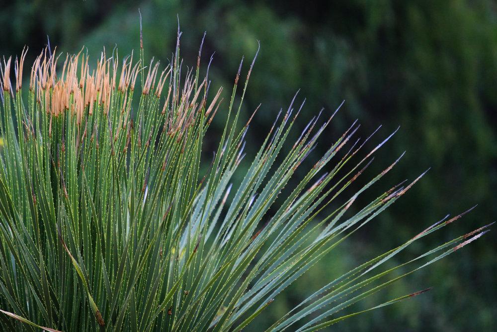 Sunsets & Succulents - Holli Z Photography - 5.jpg