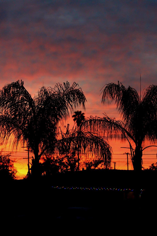 Redlands Oranges - Holli Z Photography - 1.jpg