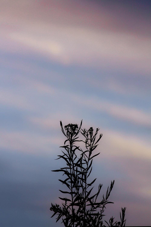 Cotton Candy Sunset - Holli Z Photography - 1.jpg