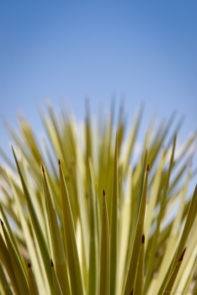 Desert Nature - Holli Z Photography - 24.jpg