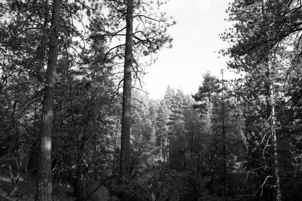 Ansels+Trees-5.jpg