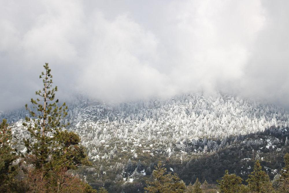 Snow Storm  3 - Holli Z Photography - 1.jpg