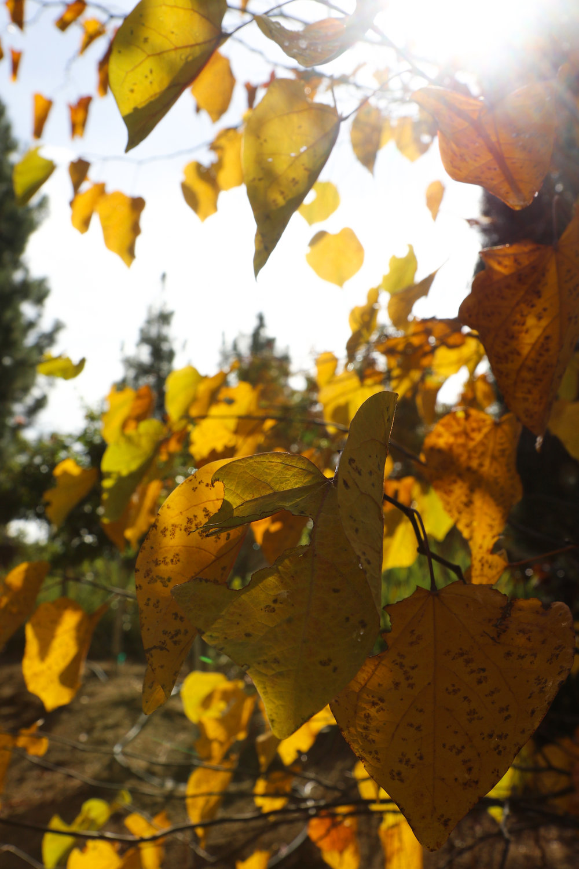 Forgotten Autumn - Holli Z Photography - 1.jpg