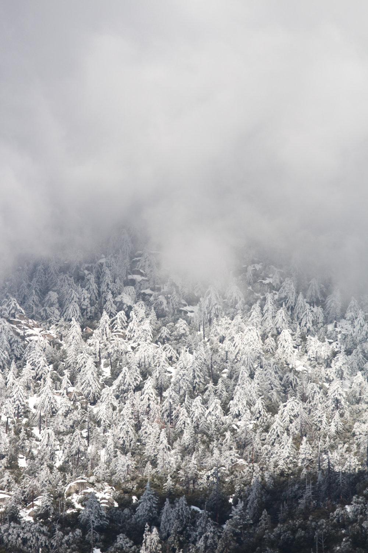Snow Storm - Holli Z Photography - 2.jpg