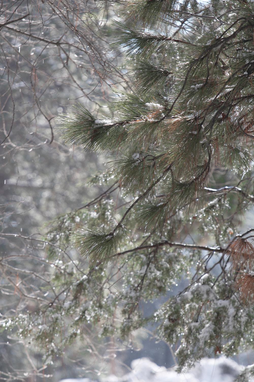Winter Wonderland - Holli Z Photography - 1.jpg