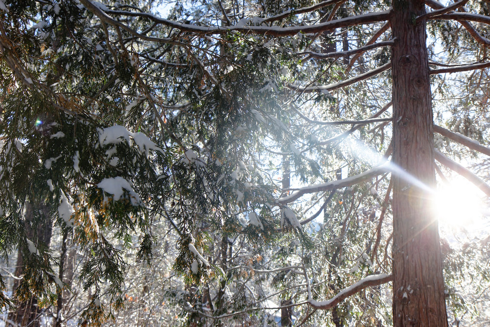 Winter's Light - Holli Z Photography - 1.jpg